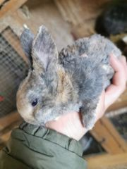 Kaninchen in 4 Wochen abgabebereit