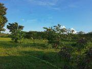 Brasilien 50 Ha Grundstück - Billigimmobilie