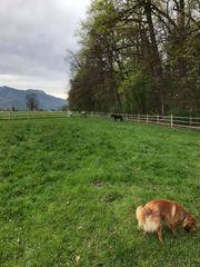 Stallmithilfe in Dornbirn Pferdehof Reitbeteiligung