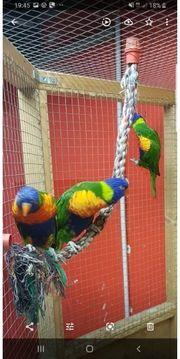 verkaufe meine papagei