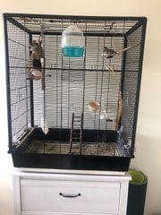 Zebrafinken mit Käfig und Zubehör