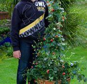 6x IMMERTRAGENDE BIO Kletter Erdbeere