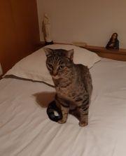 elegante Katze Pepa sucht ein