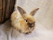 2 kaninchen kastraten