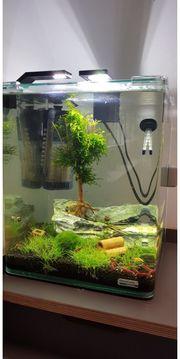 Aquarium Einrichtung und Betreuung