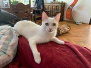 2 superschöne Katzen suchen ein