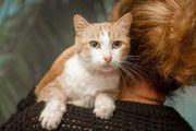 verschmuste Katze Seele sucht ein
