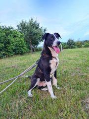 Junger Mischlingsrüde sucht Zuhause Junghund