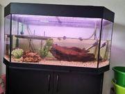 2 moschus Schildkröten mit aquarium