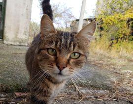 Tierbetreuung Lochau Umgebung: Kleinanzeigen aus Lochau - Rubrik Tierbetreuung