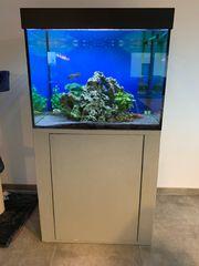 Aquarium 288l Komplettset inkl Besatz