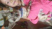Liebe Chihuahuahündin
