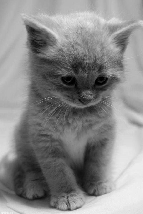 Hat jemand ein junges Kätzchen