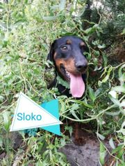 Sloko sucht sein für immer
