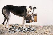 Ist das Schicksal von Estela