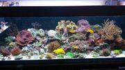 Meerwasser Verschiedene Korallen Weiche SPS