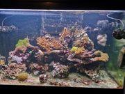 Verkaufe Meerwasser Aquarium RedSea Max