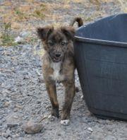 Morty - kleiner Welpe vom Tierschutzverein -