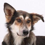 Lycaena bildhübsches Hundemädchen sucht Familie