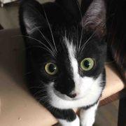 Entzückender Katzenjunge Tucker wartet auf