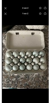 Celadon Eier