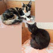 Katzenmädels Pia und Velvet suchen