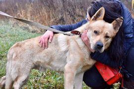Hunde - Bruno - ein Goldschatz mit Handicap