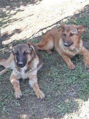 Bella und Bonny suchen ein