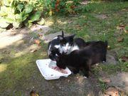 4 schöne Kätzchen abzugeben