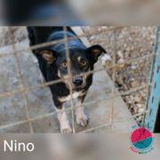 Nino- Hundehalter mit großem Herz