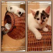 Baby Katze Kitten Amigo sucht