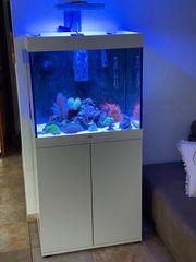 Meerwasseraquarium Meerwasser Seewasser