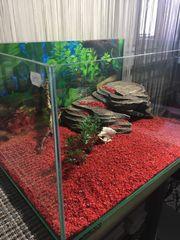 Terrarium und Aquarium mehrere große