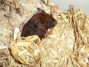 Hamster inkl komplettem Zubehör zu
