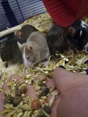 5 Mäuse Damen Zubehör
