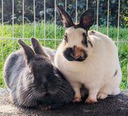 Kaninchenpärchen
