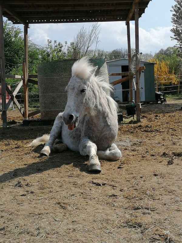 Prinzessinnen Pony sucht Mami mit