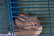 Streifenhörnchen abzugeben