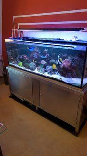 Meerwasseraquarium Nur Komplett zu verkaufen