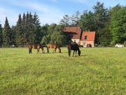 Pferd zur Verfügung Reiter sucht
