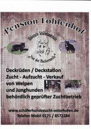 Altdeutsche Schäferhunde von der Hackermeile