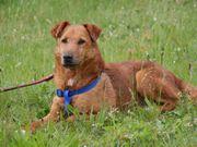 Tierschutzhund Hanna sucht 2beinigen Freund