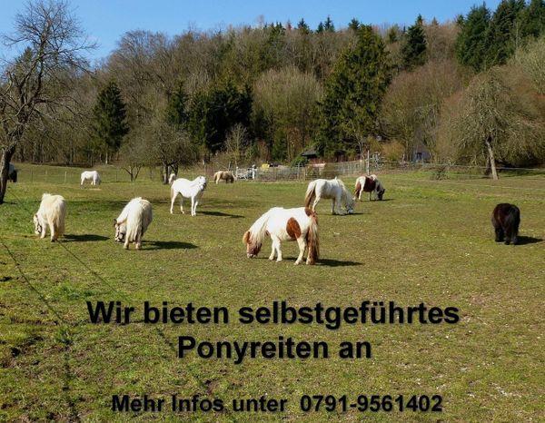 Selbstgeführtes Ponyreiten auf dem 74538 Pferdehof Dendelbach