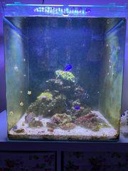 Salzwasser Aquarium komplett