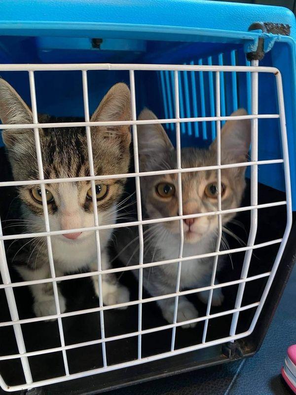 Bruder Suchen Ein Zuhause In Frankfurt Katzen Kaufen Und Verkaufen Uber Private Kleinanzeigen