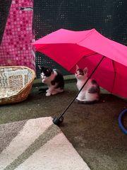 Kätzchen abzugeben