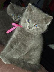 Katzenbabys suchen ein neues Zuhause