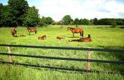 Einstellplatz Pferde