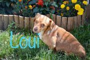 Rüde Loui sucht liebevolles Zuhause