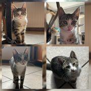 Baby Katze Kitten Fran Fine